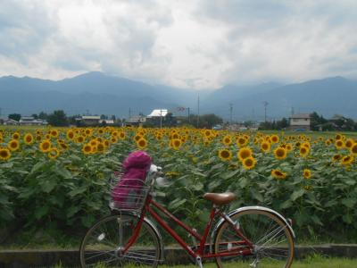 18切符で安曇野サイクリング♪★鎌倉から日帰り★