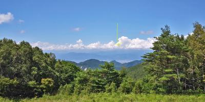 峰の原高原で見る植物