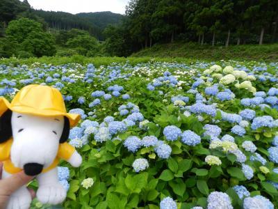 これは見事!『みちのくあじさい園』で紫陽花三昧◆2019年7月・家族で行く南東北旅行《その3》