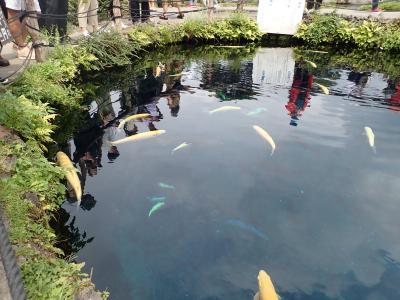 富士吉田火祭りはやっぱり凄い! 2