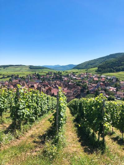 フランスの美しい街を訪ねる旅[花と葡萄畑に囲まれたエギスハイムとリクヴィル]