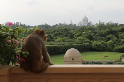 インドでホテルはしご旅②「ジ オベロイ アマルヴィラス アグラ」編
