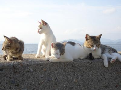 島めぐり猫めぐり 佐柳島編  ネコノシマホステル宿泊