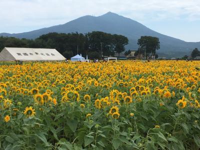茨城県 筑西市の「あけのひまわりフェスティバル」に行ってきました