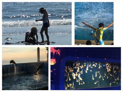 夏の終わりに~2019 夜の新江ノ島水族館