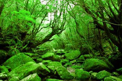 ★「苔の森」屋久島へ 白谷雲水峡編★