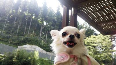 ペットと豊田香恋の里しもやま日帰り旅