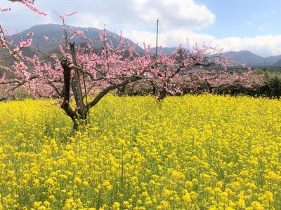 山梨の桜と桃