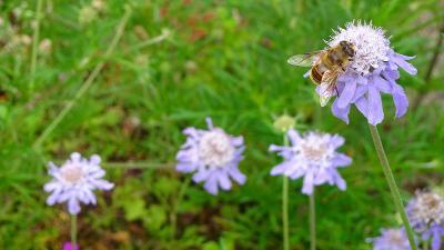 六甲高山植物園へ、サギ草とキレンゲショウマを見に行きました その5。
