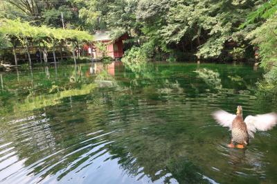 青春18きっぷで静岡・山梨日帰り旅 世界遺産を巡って冷泉28℃の湯沢温泉でクールダウン。夕食は甲府で甲州名物を満喫