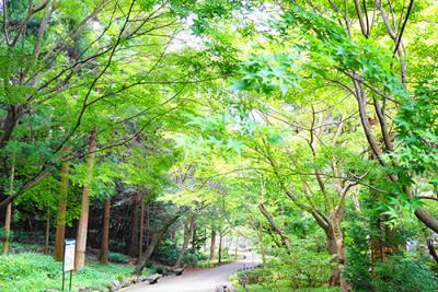 緑あふれる心地良い空間「東山植物園」を散策