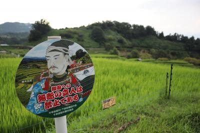 千早赤阪村で棚田を見る旅