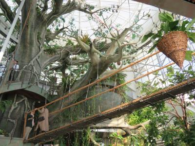 ドバイ時間 : 砂漠に招かれたジャングルを訪ねて