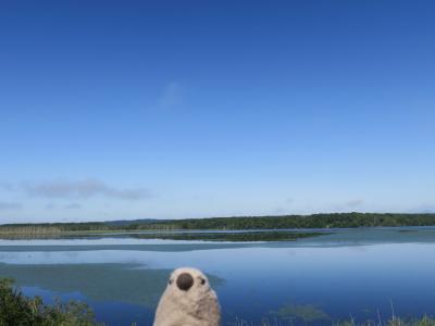 道東の大自然を巡る旅 with ゴエモン part1 湿原の文鳥