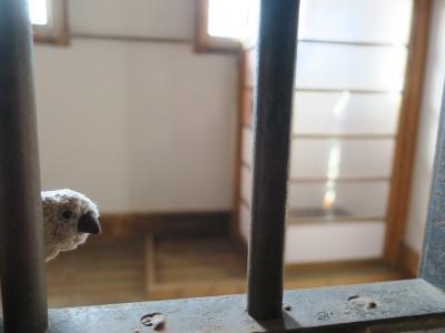 道東の大自然を巡る旅 with ゴエモン part4 監獄の文鳥