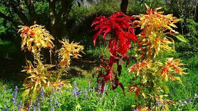 花の笹原公園へ・・・その3。