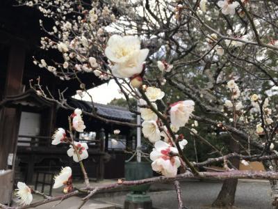 何度目かわからないけど、また京都