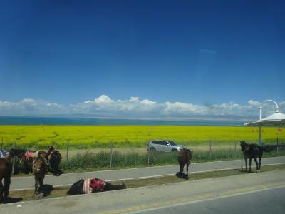 vol.18-5/5 中国 青海省西寧 菜の花畑と青海湖、そしてドタバタ帰国
