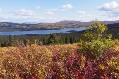 秋のホワイトホースでオーロラと自然を満喫(4日目)