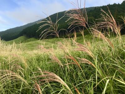 2019年9月 箱根仙石原温泉とススキ草原