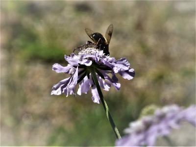 """2019年9月初め、夏の花もおわりに近い〝六甲高山植物園""""へひと時の避暑を兼ねて訪れます!"""