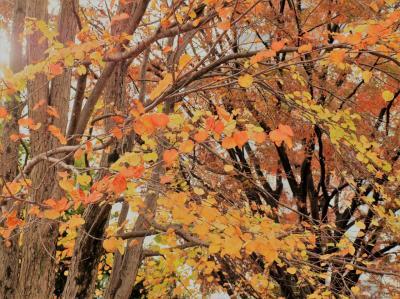 ちょっとだけ。秋の上野公園界隈/2018