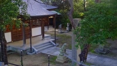 早朝散歩 荒牧バラ公園から天神川を下り、途中から県道335号線で帰宅 その2。