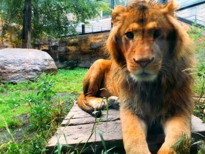 北海道旅行5日目 旭川動物園へ