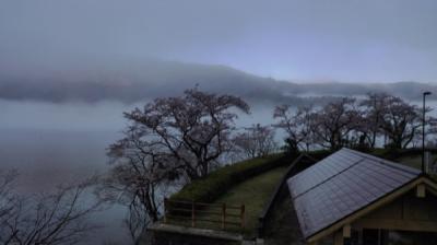 神秘的な朝霧と桜、琵琶湖、滋賀県【絶景めぐり】ドローン、春旅2900キロ2019