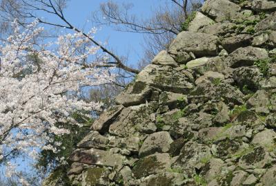 2018春、四国の百名城巡り(19/42):3月26日(9):宇和島城(2):野草と樹木を観察しながら天守へ