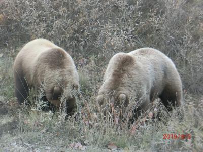 旅物語のJALチャター便でアラスカに(デナリ国立公園)