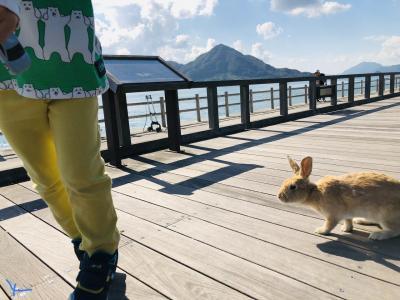 親子二人旅 広島その3  大久野島でうさうさうさぎ!