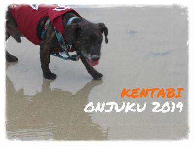 犬旅 ~御宿2019~