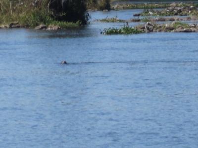 チョベ川ボートサファリ。