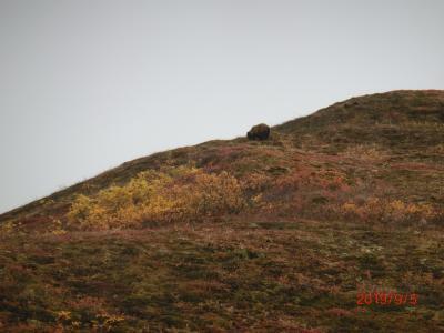オーロラと動物と氷河(デナリ国立公園)in Alaska