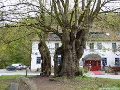 番外編:処刑された女性たちの叫びを伝える血ぬられた菩提樹(Die Blutlinde)の伝説。