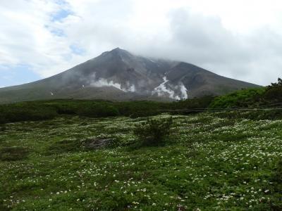 北海道大雪山の神々の遊ぶ庭に咲く可憐な高山植物