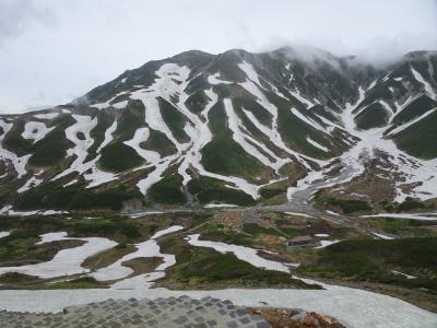 残雪とお花畑と雷鳥と ~針ノ木岳からの、黒部アルペンからの、立山トレッキング