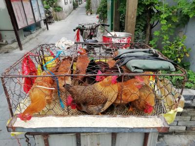 朝の巷には、生きた鶏をその場で捌いてくれる超新鮮な鶏肉店があった♪24時間図書館♪2019年6月中国 揚州・鎮江7泊8日(個人旅行)103
