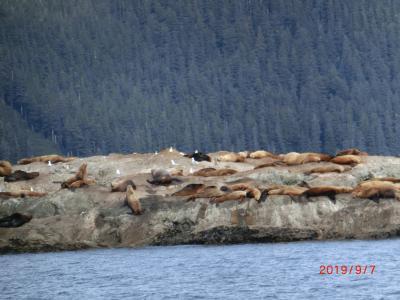 オーロラと動物と氷河(26氷河クルーズ)in Alaska