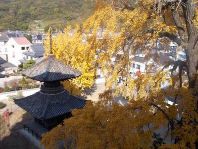 遍照寺多宝塔と黄葉の大イチョウほか竹喬美術館など笠岡市内散策