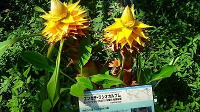 大阪市鶴見区 花博記念公園の咲くやこの花館へ その2。