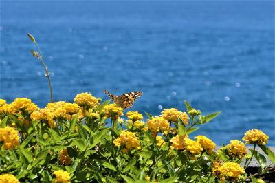 魅惑のシチリア×プーリア♪ Vol.511 ☆レトジャンニ:美しいリド「パラディーセビーチクラブ」午後もまったりとまどろむ♪