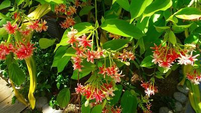 大阪市鶴見区 花博記念公園の咲くやこの花館へ その4。