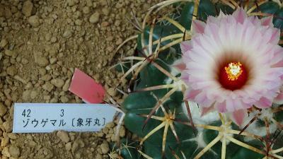 大阪市鶴見区 花博記念公園の咲くやこの花館へ その5。