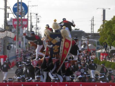 ド迫力の岸和田・春木だんじり祭り