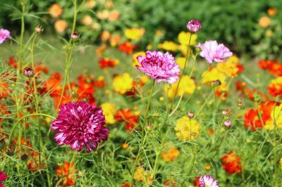 里山ガーデン、初秋の彩り・・・