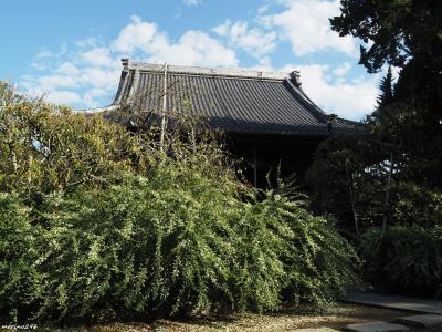 鎌倉の萩コレクション 2019