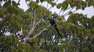 ブラジルの大湿原パンタナールで野鳥、動物観察!最初のロッジPouso Alegre周辺は野鳥の宝庫!