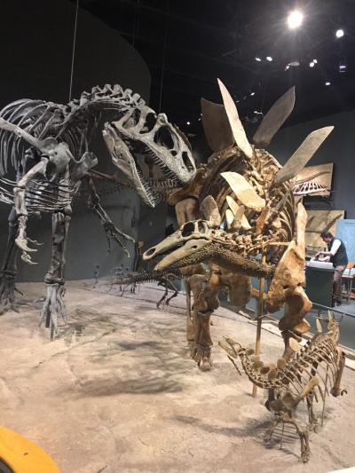2019年9月 アメフト観戦のためのコロラド州デンバーへの4泊6日旅(3日目:デンバー自然科学博物館・コロラド博物館)